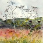 Cow Parsley LOWRES