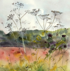 Cow Parsley LOW RES